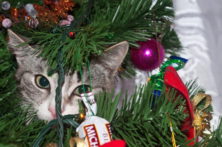 cat_on_the_tree_3
